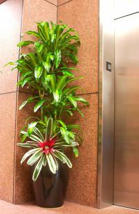 Tropical West Designs (800) 700-8767 - Plant Service Los