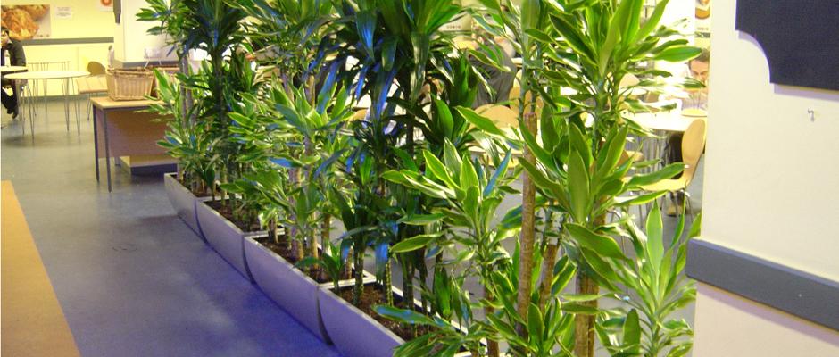 Table Plant Arrangements - Tropical West Designs (800) 700-8767
